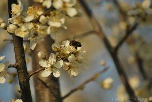 semne_de_primavara_iv_by_lk_photography-d614lmy