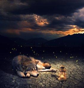 lonely_wolf_by_ikyuvaliantvalentine-d6by0w5