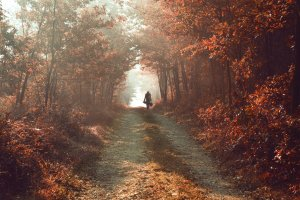 into_the_autumn_by_joiedevivre89-d5jx19b